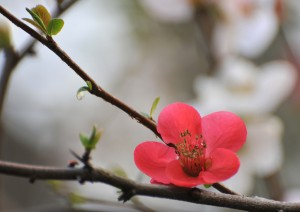 asian_flower2
